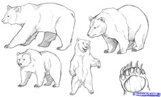 Easy to Draw Bear Standig | how to draw bears step 6
