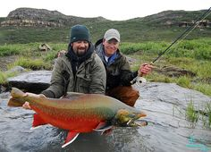 This huge char was caught on a fly by Craig Blackie (holding rod). It was over 24 lbs and probably the largest fly-caught char in history. It was released seconds after this photo. Both guys in this shot are fish biologists and specialize in Salmonid morphology and taxonomy. Okay, so where was this? Tree River of course. Photographer:  Paul Vecsei