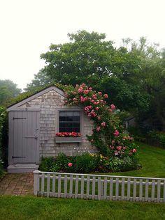 DEIRDRE---climbing roses-- Little shingled cottage with flowering vines