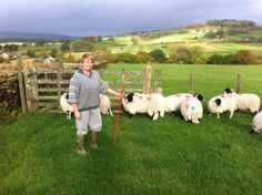 Christine Grange's Swaledale lambs for the shop. Grass and moorland fed on Beamsley Beacon, that's about 3 food miles away! World Famous, Lambs, Grass, Shop, Animals, Animales, Animaux, Grasses, Animal