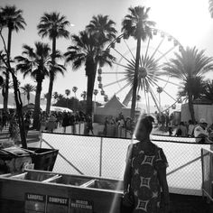 Palm trees & sunshine