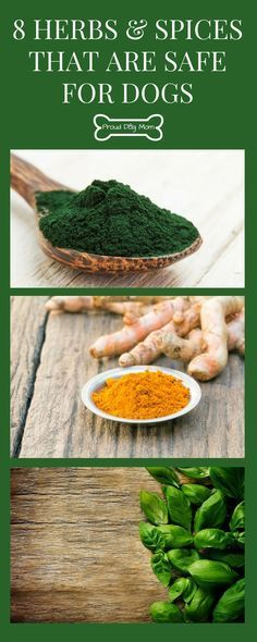 8 Herbs and Spices That Are Safe For Dogs | Dog Health | DIY Dog Food | - Tap the pin for the most adorable pawtastic fur baby apparel! You'll love the dog clothes and cat clothes! <3