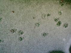 Spuren meiner Maine Coon Mix-Katze Kira http://www.katzentipps24.de