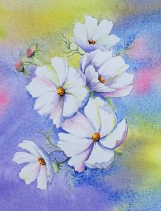 White Cosmos, watercolour by Judith Jerams, France