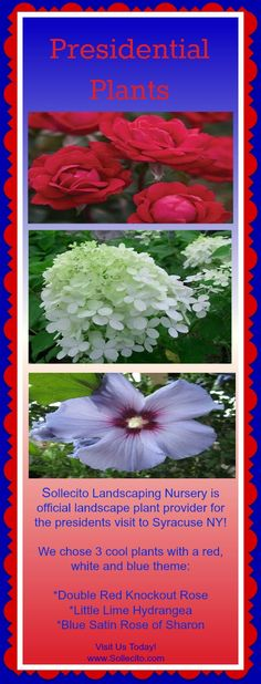 www.Sollecito.com Presidential Plants #Gardening #Flowers #LandscapingNursery #LandscapeDesigner