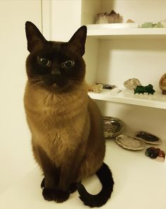 """She was pawing at my crystals until I walked in. This is her """"I didn't do it"""" face.   cats funny pictures"""