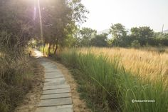 Go for one of the many walks inside Khem Villas at Ranthambhore National Park. One of the best places to stay, Khem Villas will make you feel you live a safari.