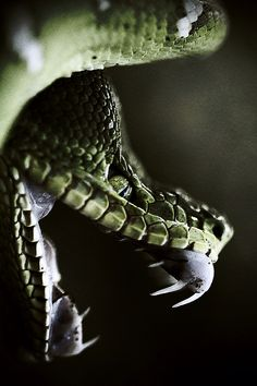 The Devil's Music Paranormal: Demon maggots in my cranium. Snake Art, Pet Snake, Nature Animals, Animals And Pets, Cute Animals, Reptiles Et Amphibiens, Mammals, Beaux Serpents, Beautiful Creatures