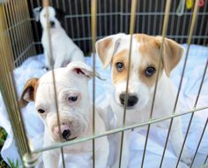 Palm Beach County bans dog, cat sales at new pet stores in effort to clamp down on puppy mills - Sun Sentinel