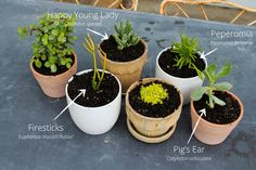 Succulents look terrific in neutrally-colored pots | The Gray Boxwood