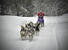 "Good Times Dog Sledding Adventure Breckenridge Colorado. I'm booked  for mid Jan. 2013 with my sis-in-law and niece Can't wait to meet our team of Siberian Huskies and be the ""Musher"", so excited!"