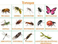 Preschool Education, Preschool Kindergarten, Greek Language, Second Language, Insect Crafts, Carnivore, Bugs And Insects, Early Childhood, Crafts For Kids