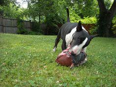 Batu Loves Football