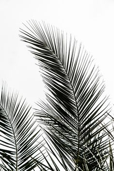 Palm Leaves Mini Art Print by Mareike BAPhmer - Without Stand - x Black And White Prints, Black And White Aesthetic, Black White, Black And White Leaves, White Art, Framed Art Prints, Fine Art Prints, Wall Prints, Endless Summer