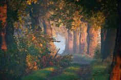 Autumn by Mist73  on 500px