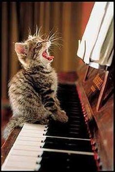 very talented kitten...