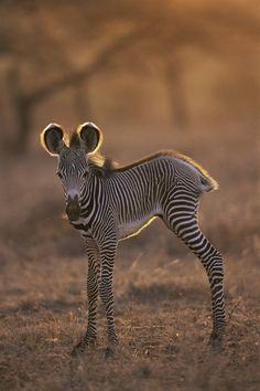 Top 50 des bébés animaux les plus mignons de l'histoire de la mignoncité | Topito