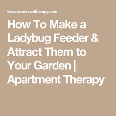 How To Make a Ladybug Feeder & Attract Them to Your Garden   Apartment Therapy