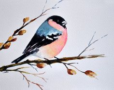 ORIGINAL Watercolor Bird Painting, Bullfinch Illustration 7x10 Inch