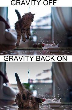 cute funny kitten memes - Google Search                                                                                                                                                                                 More