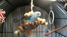Every bird I've owned LOVES this silly coconut toy. The parakeets I had would sleep in it.