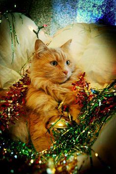 . Cats, Animals, Gatos, Animales, Animaux, Animal, Cat, Animais, Kitty