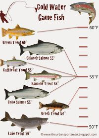 The Urban Sportsman: Understanding Gamefish By Temperature Cold Water Game Fish Fly Fishing Tips, Fishing Rigs, Fishing Knots, Gone Fishing, Fishing Lures, Fishing Stuff, Survival Fishing, Fishing Humor, Salmon Fishing