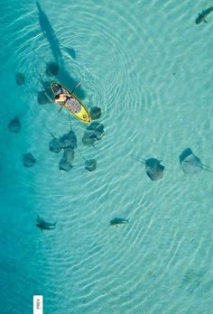 paddle boarding with sharks and rays,Moorea
