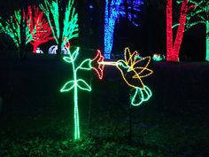 Meadowlark Gardens Winter Walk of Lights, Bull Run, Virginia; must go sometime!