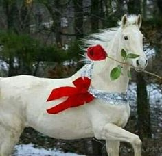 A Beautiful, Classic Christmas - should do this with all three of my horses for a Christmas card! All The Pretty Horses, Beautiful Horses, Animals Beautiful, Cute Animals, Christmas Horses, Christmas Animals, Merry Christmas, White Christmas, Beautiful Christmas