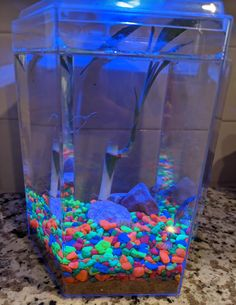 Best Pet to Get During Covid Quarantine ~ Froggy's Lair Easy to Care for African Dwarf Frogs #froggyslair | Bragging Mommy Dwarf Frogs, Bamboo Plants, Kid Names, New Friends, African, How To Get, Pets, Homes, Houses