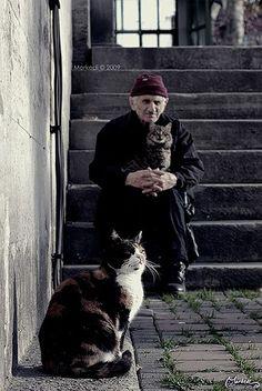 Kedi babası (by morkedi ©)