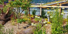 Flowers and logs in green roof garden - contemporary - Landscape - Seattle - The Watershed Company Landscape Elements, Green Landscape, Contemporary Landscape, Landscape Architecture, Landscape Design, Types Of Roofing Materials, Roofing Options, Living Roofs, Steel Roofing