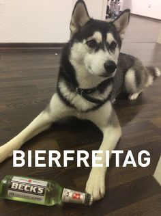lupa in the house | bierfreitag | beer friday | office - appcom