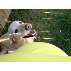 Dog loving baby bump