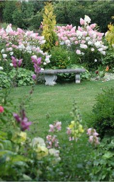 Garden. Hydrogea