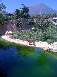 Benidorm Zoo