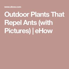 Outdoor Plants That Repel Ants (with Pictures) | eHow