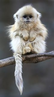 Too cute, I want one!!! If I keep seeing all these adorable animals then I'm going to need a zoo!!