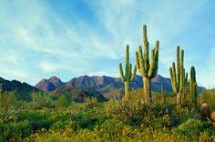 3 Perfect Non-Golfing Itineraries in Scottsdale, Arizona | Fodor's