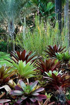Dypsis decaryi, Arundina graminifolia and Alcantarea | Luiz Carlos Orsini