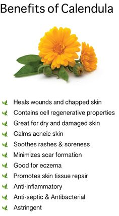 Benefits of Calendula. Also known as Marigold . - Benefits of Calendula. Also known as Marigold - Healing Herbs, Medicinal Plants, Natural Healing, Herbal Plants, Natural Herbs, Natural Oils, Natural Health Remedies, Herbal Remedies, Herbal Medicine