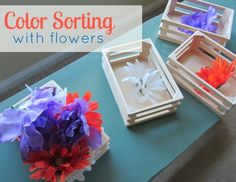 Color Sorting With Flowers  -  Pinned by Lessonpix
