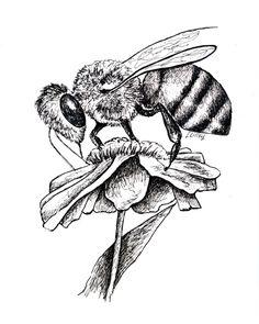Pen & Ink bee and flower http://felicialilley.smugmug.com/Portfolio/Published/i-r7z9rRC