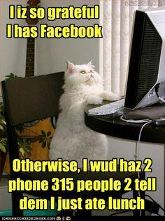 Facebook cat.