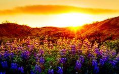 Summer Violet Sunset