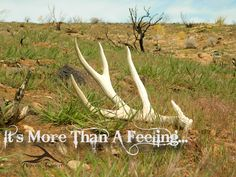 It's More Than A Feeling...  hunting / hunting quotes / shed hunting / antler trader / mule deer / antlers