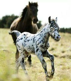 Beautiful mom and foal