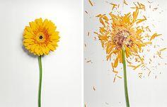 {Art} Broken Flowers by Jon Shireman