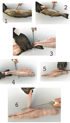 How to Filet a Fish. (it's a survival board. just deal with it girls)